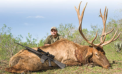 The .308-caliber LAR-8 is plenty of gun for big-game hunting. James Jeffrey, the author's friend, dropped this beautiful 6x7 elk with one shot using Federal's 165-grain Fusion loading.