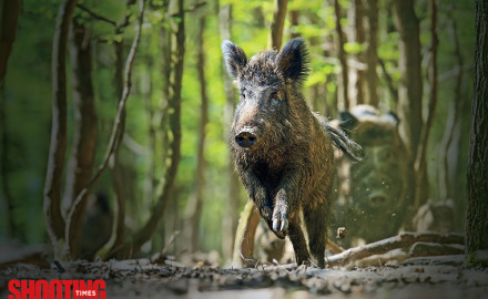 Hog hunting has become so popular that specially designed firearms and ammunition tailored for it