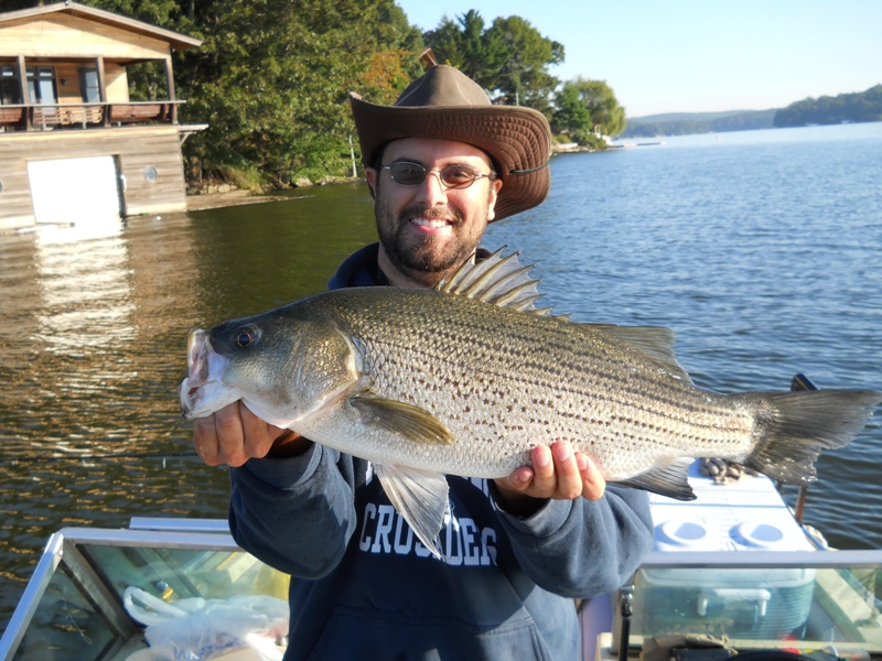 Christopher Pereira Hopatcong NJ   Species: Hybrid Striped Bass Date Caught: 09/01/2011 Kept /