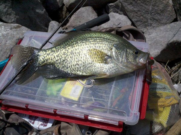 Zane Ohrtman Ortonville Mn  Species: Crappie (Black or White) Date Caught: 07/16/2011  Kept
