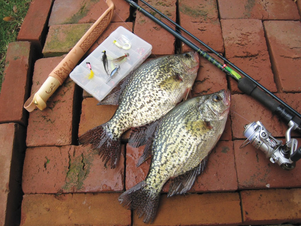 Catching crappies from shore in fisherman for Best shore fishing in michigan