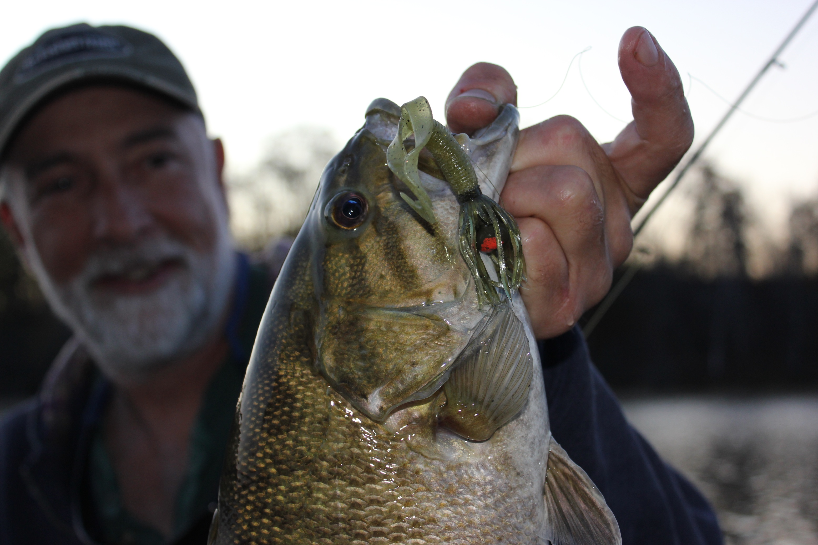 Smallmouth Chronicles    As water temperatures drop into the low 50°F range, smallmouths
