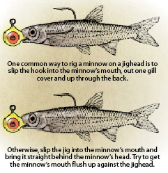 //www.in-fisherman.com/files/2011/10/minnow.png