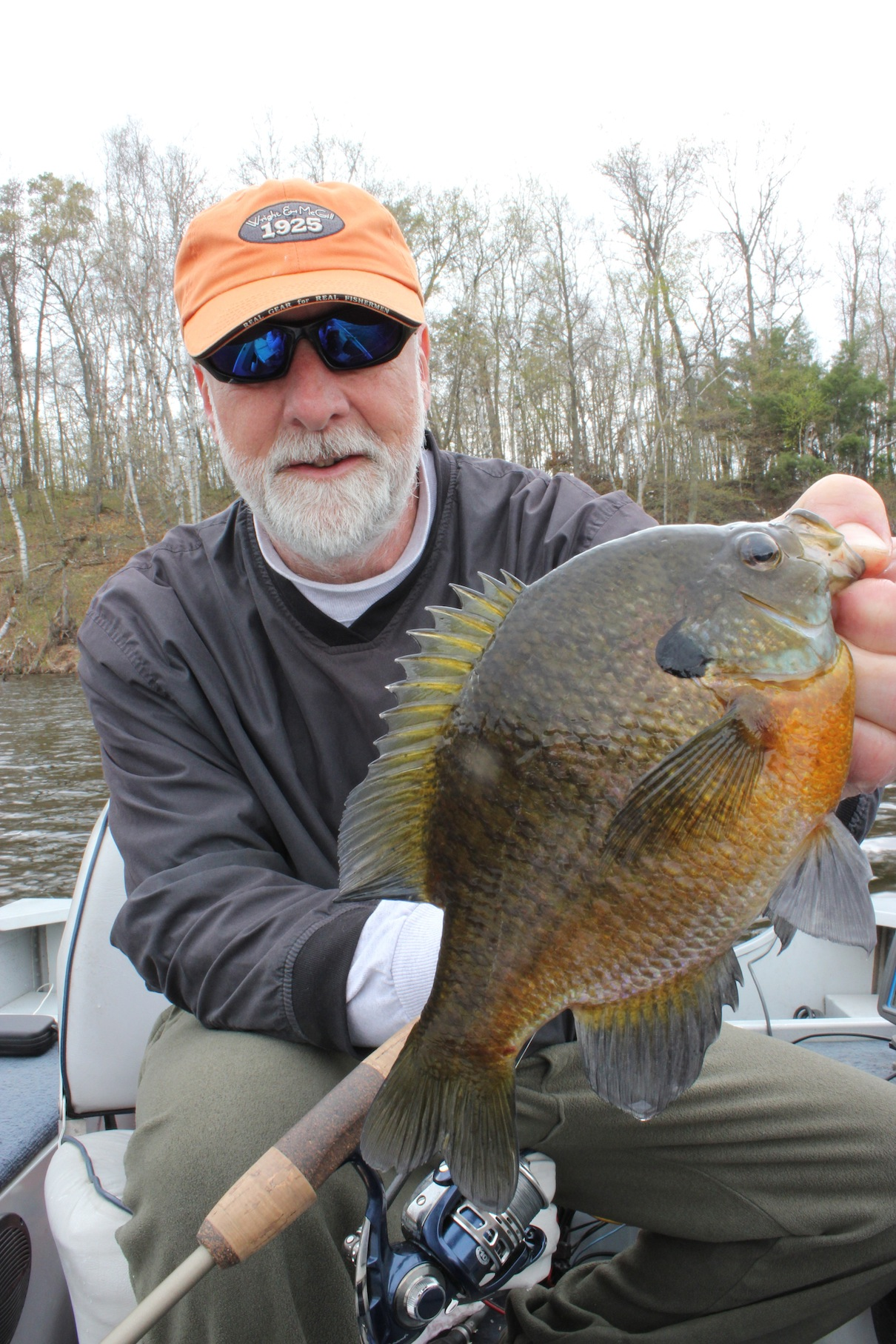 Bluegillin fisherman is the worlds authority on bluegill for Blue gill fishing