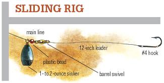 Catching Carp During Spring- In-Fisherman