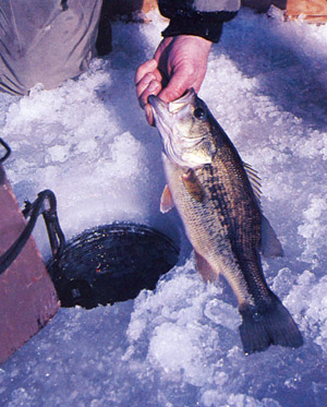 Ice Fishing Bass