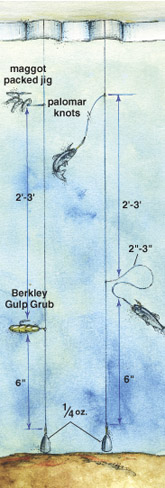 Tricking ice perch in fisherman for Yellow perch fishing rigs