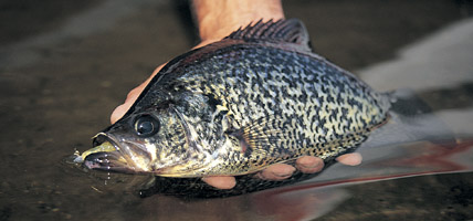 Spring Crappie Locations
