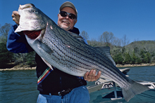 if0603_Stripers1
