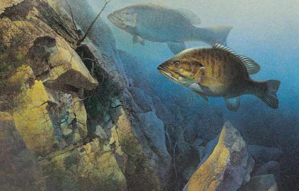 The World Apos S Top 10 Smallmouth Locations