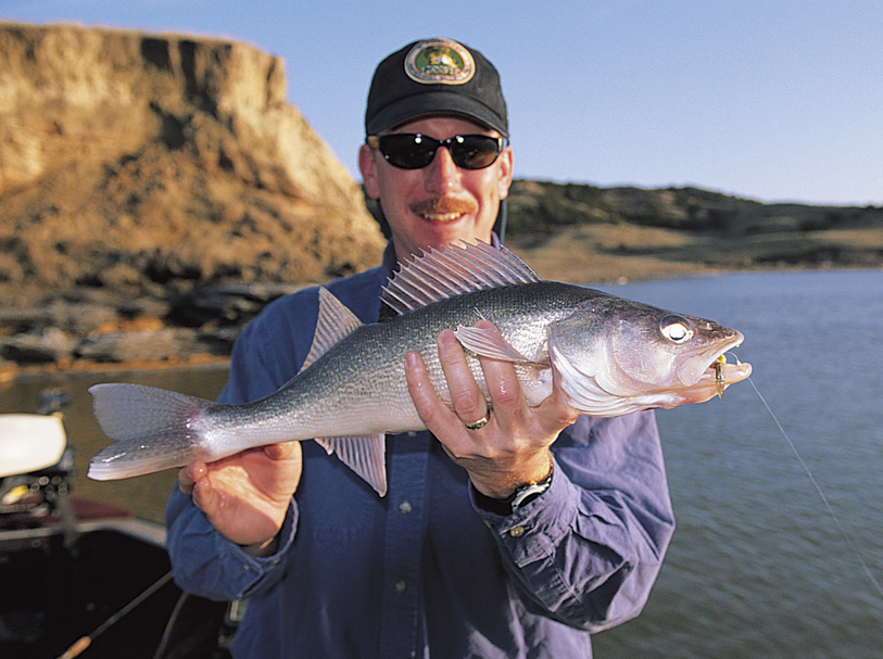 In spring, prespawn walleyes move to specific shallow locations ranging from about one to six feet