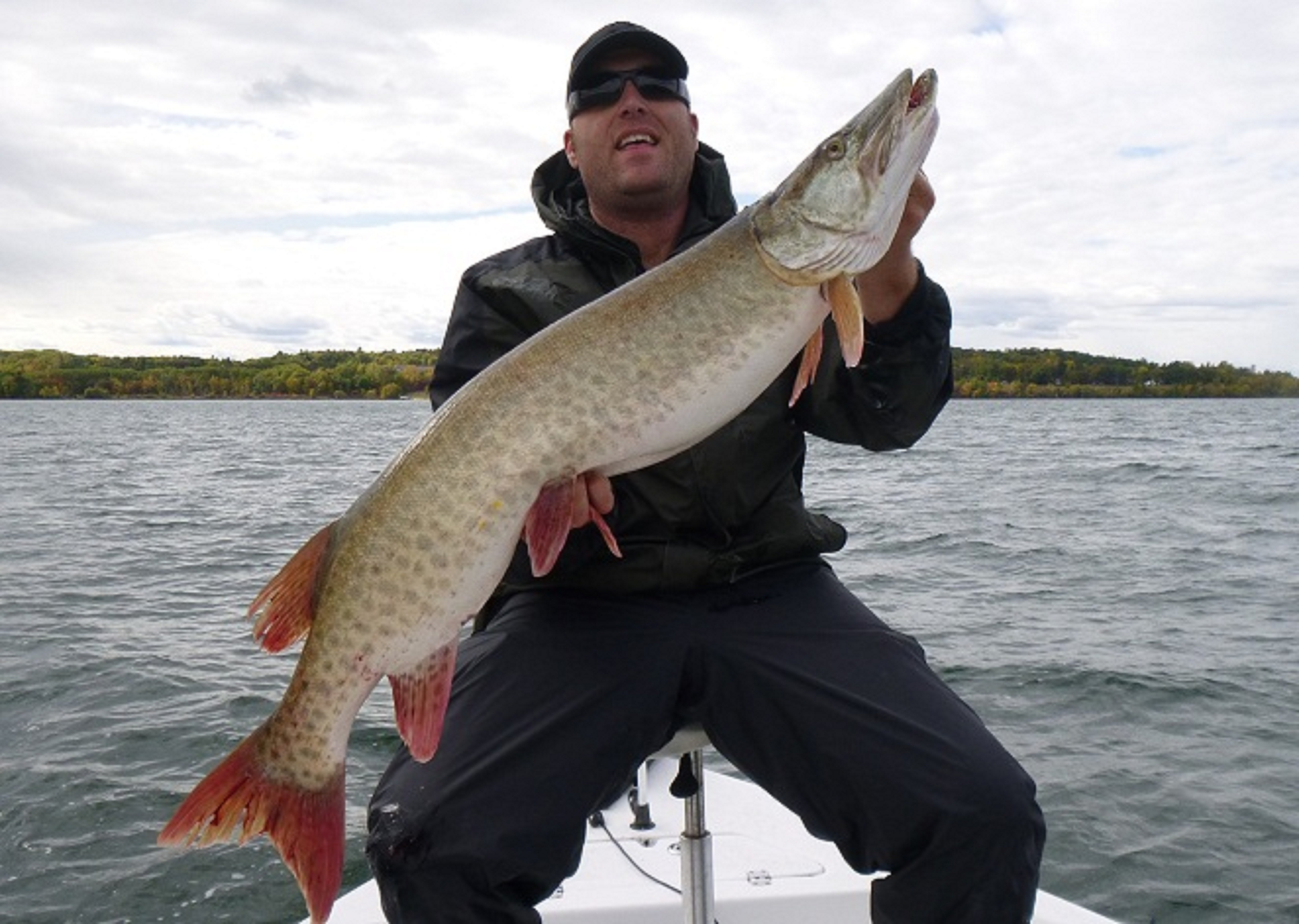Phil Bauerly Walker Mn  After a fairly dismal season of casting for Muskies, I got out in a big