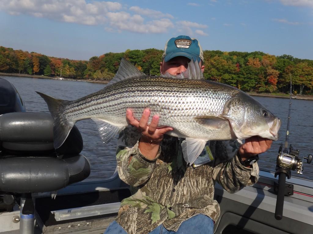 Fall striper in fisherman for Lake wallenpaupack fishing