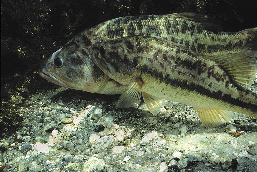 FishSpawning