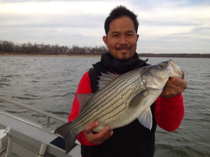 how to fix white bass