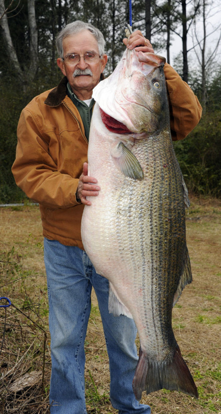 James R. Bramlett caught the new Alabama state record 70-pound striped bass while fishing the