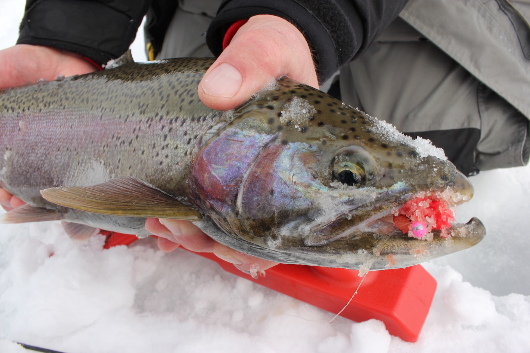 Ok, I lied (again). Promised to deliver a little more inside information on ice steelhead