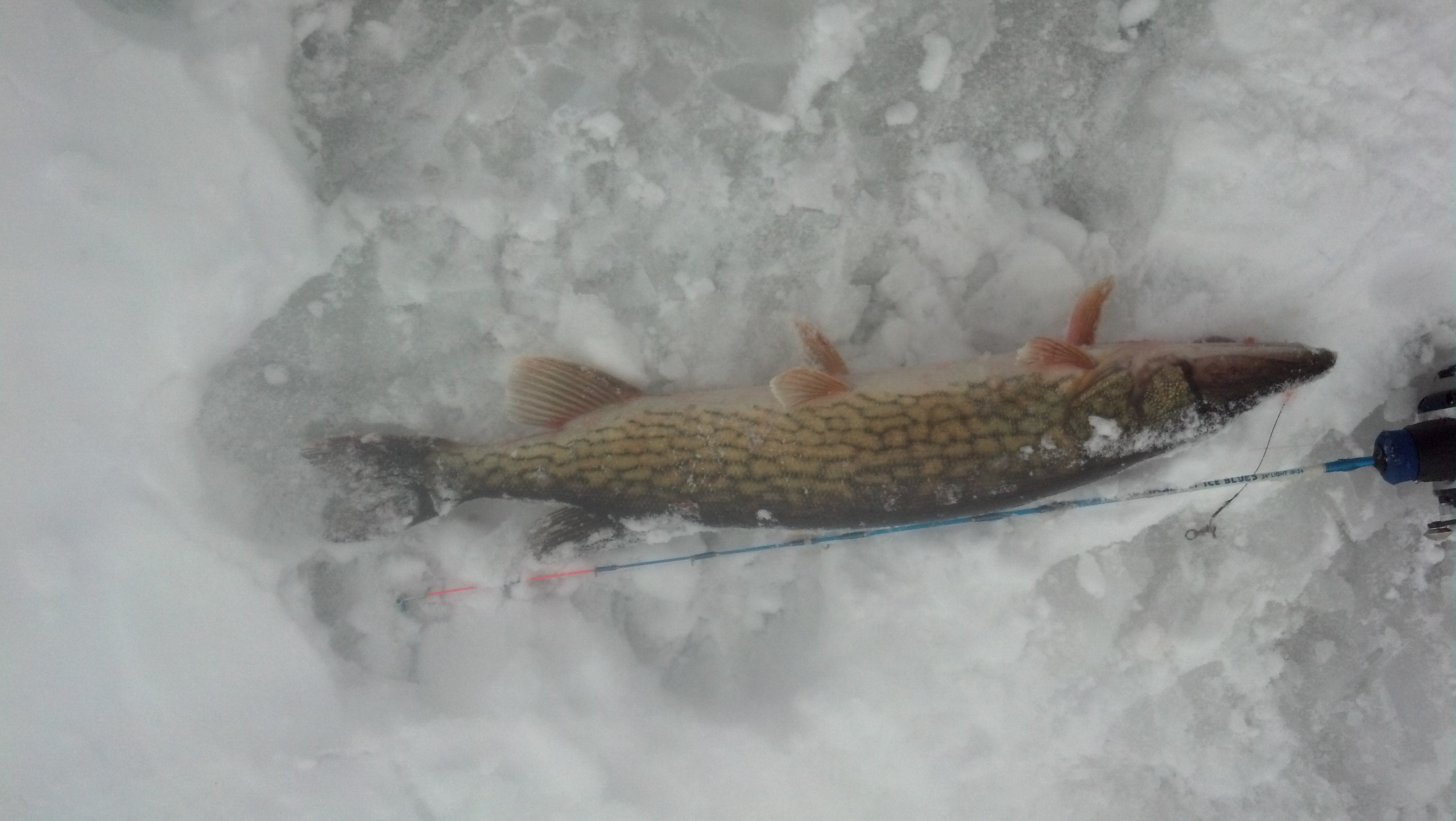 Bud Tae same NH  30 mph winds, snow squalls and a slow day fishing. This was the only one