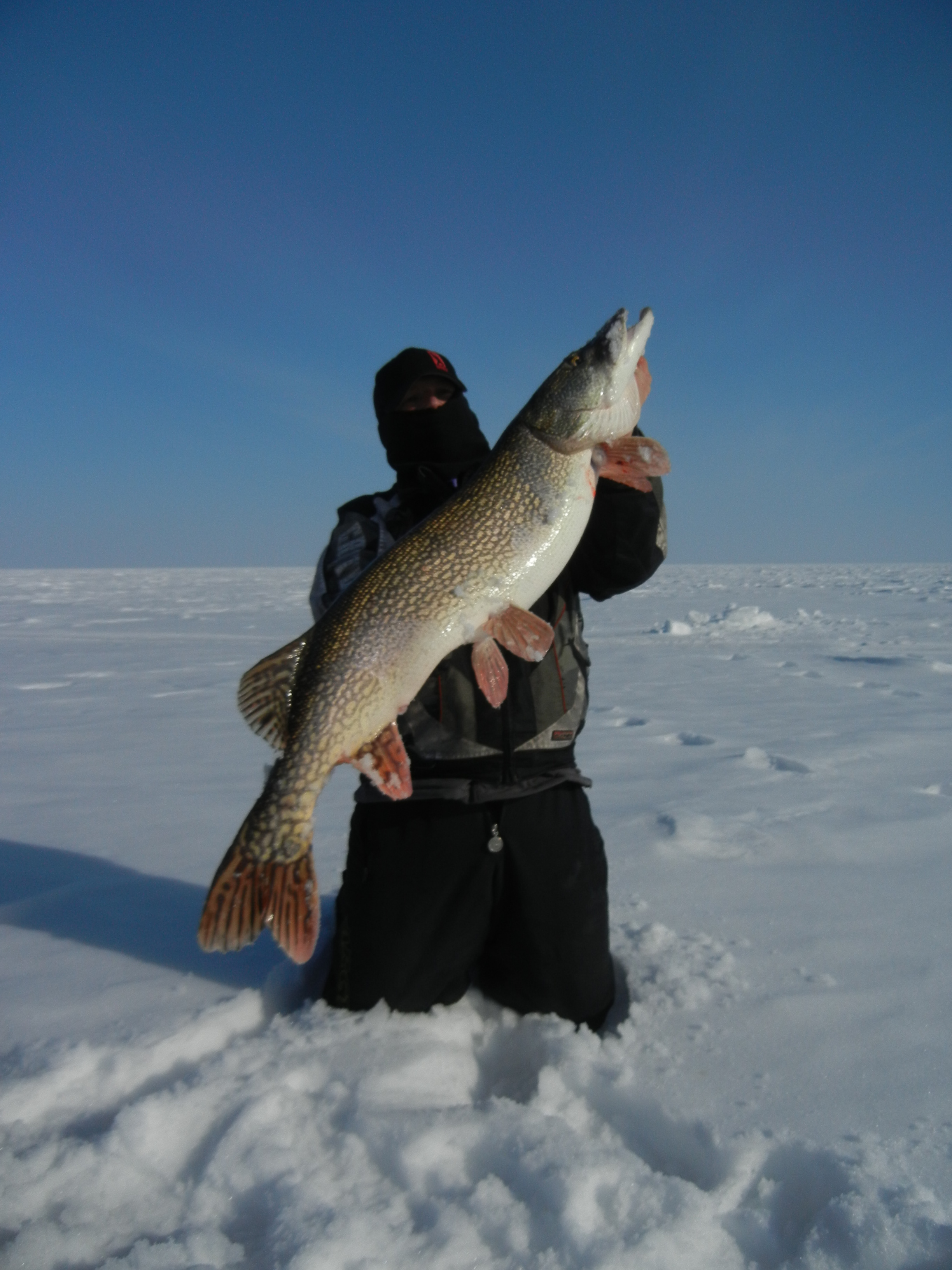 Josh Easthouse salol mn  Fish was caught on LOTW on a tip up with a sucker minnow.  Species:
