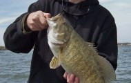 St. Clair Smallie