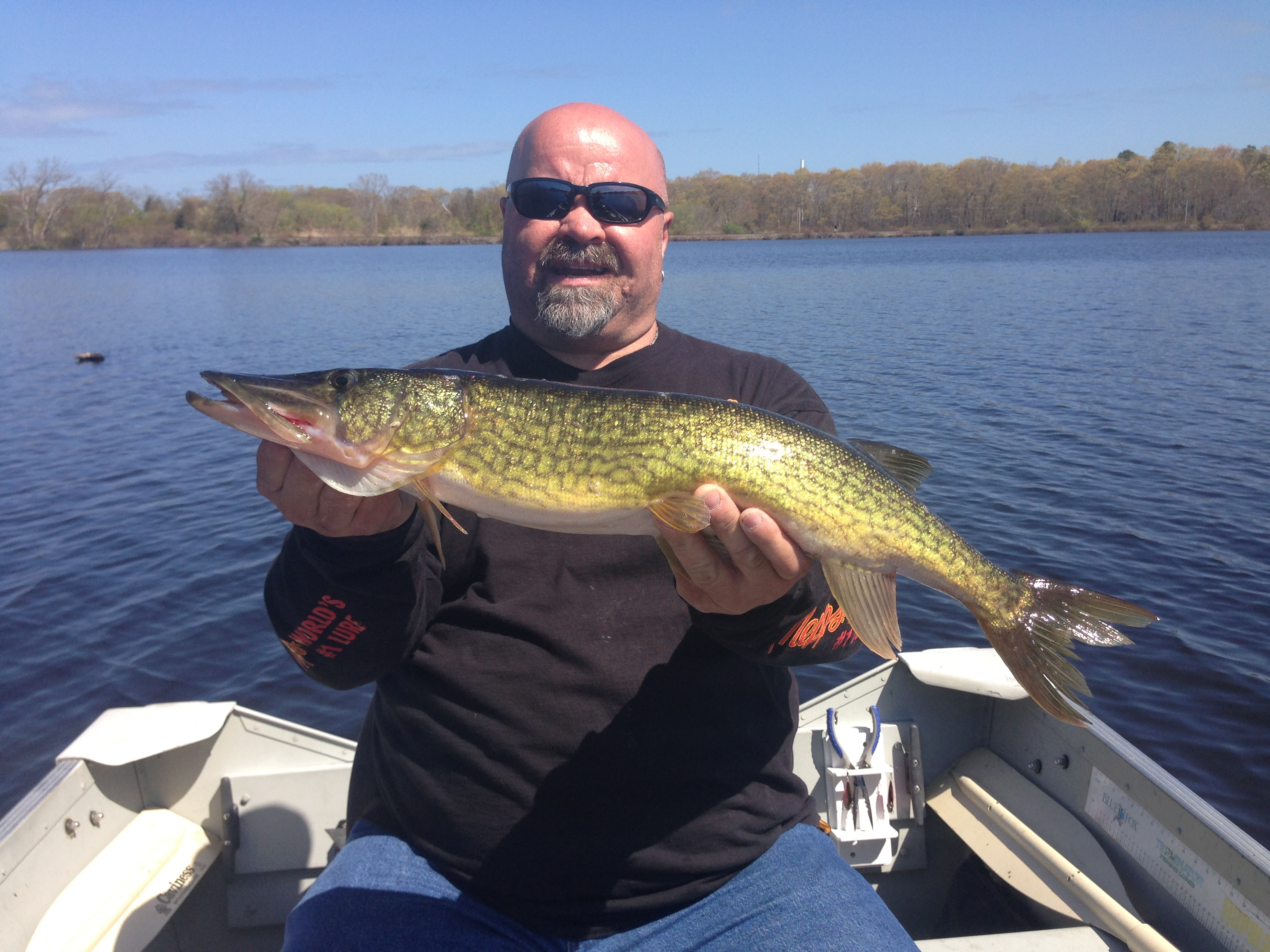 How to catch chain pickerel in fisherman for World of fishing