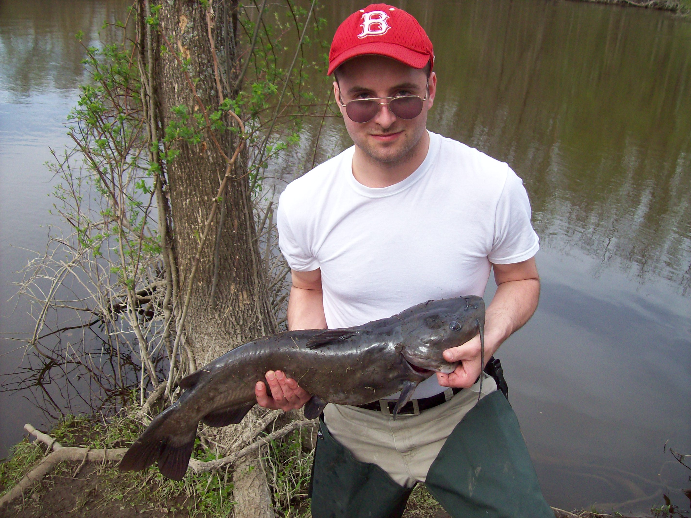 Kalamazoo River Catfish