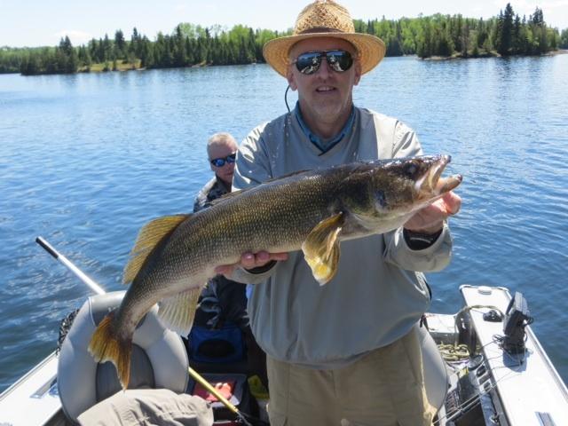 33 1/2 inch walleye