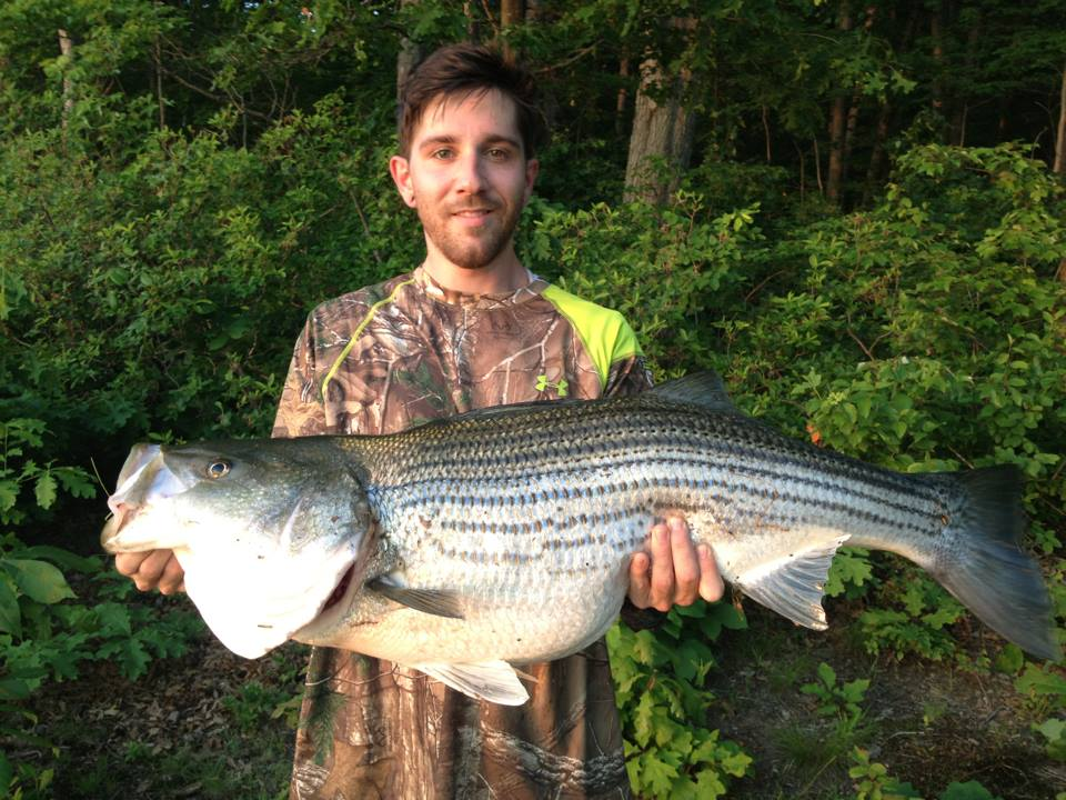 David Tanner Sykesville MD    Species: Striped Bass Date Caught: 05/30/2013 Kept / Released: