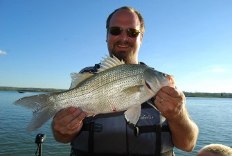 Missouri River White Bass