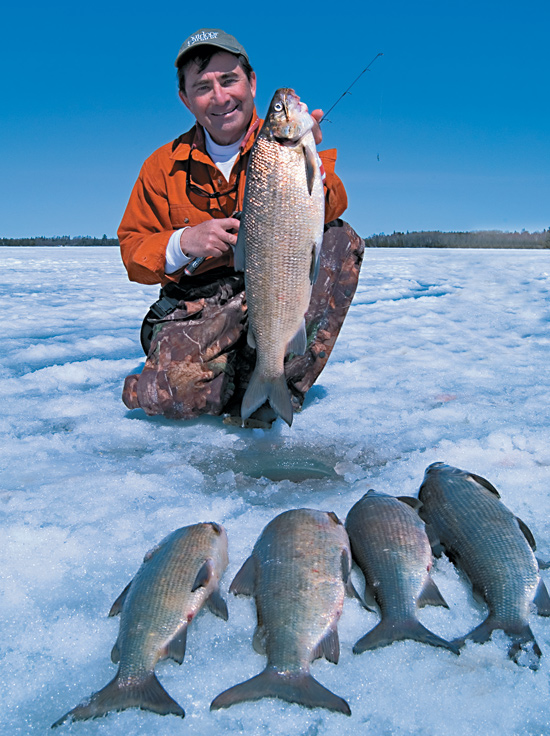 Ice fishing for whitefish in fisherman for How to ice fish