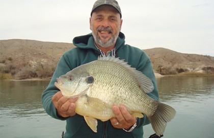 Check out this massive sunfish!