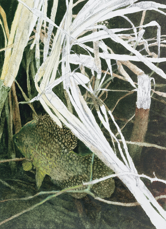 Crappies, Barometric Pressure And Weather - North To South