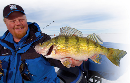 Understanding perch diets in fisherman for Ice fishing perch