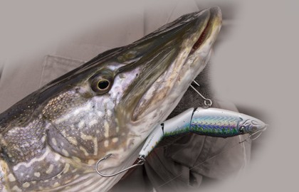 Snaggle-Tooth-Pike-Articulated-Lures-Feature-In-Fisherman