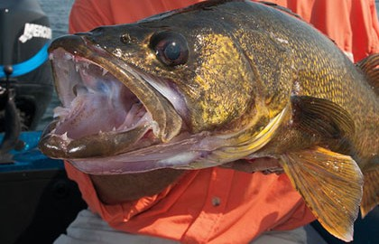 Eureka-Walleyes-Feature-In-Fisherman
