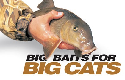 Big cats, especially flatheads, often ­prefer big meals. Offering big catfish baits may tempt the