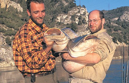 My experience with North American catfish species is limited to the Kansas River where I managed to