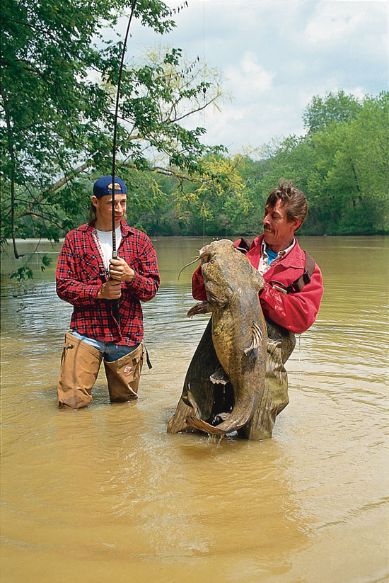 Flathead Catfish Locations And Tactics In Fisherman