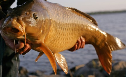 To guide your carp quest, we've lined up the best carp baits that are easy-to-fish natural baits and commercial options.
