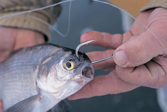 Big Catfish Baits