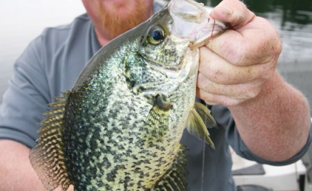 Hooks For Panfish