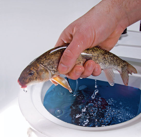 Baitfish Care and Survival