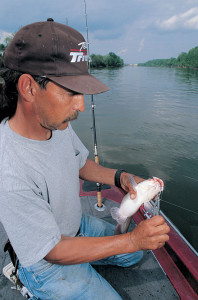 Nashville catfish guide Donny Hall favors turkey livers for blue cats in warm water.