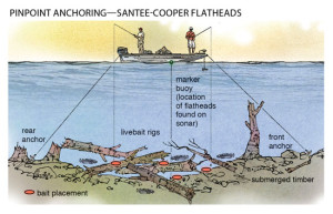 Pinpoint-Anchoring-Santee-Cooper-Flatheads-In-Fisherman