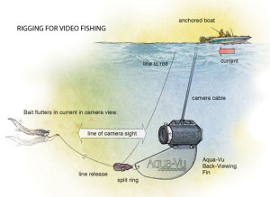 Rigging-for-Video-Fishing-In-Fisherman
