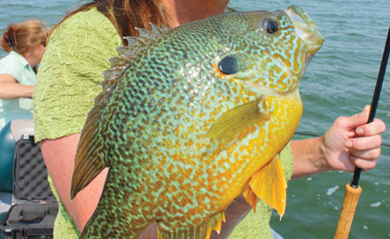 Panfish Float Rigs