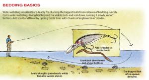 Bedding-Basics-In-Fisherman