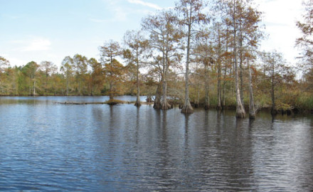 If you've never fished the dark, cypress-studded rivers that snake through the southern and eastern