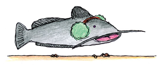 Catfish-Earmuff-Illustration-In-Fisherman