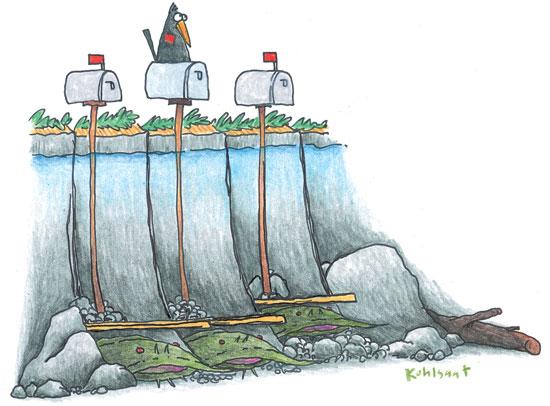 Catfish Habitat | Catfish Shore Habitat In Fisherman